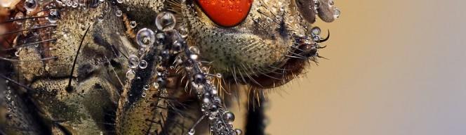 macro_fly
